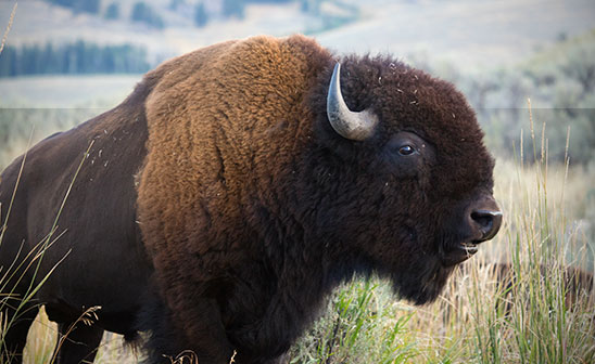 Yellowstone Natural History Association