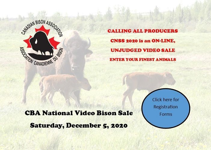CBA National Bison Sale